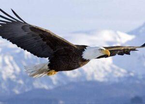 Nằm mơ thấy chim là điềm báo gì? Đánh con gì tài lộc?