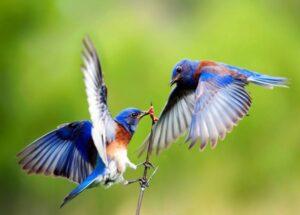 Chiêm bao thấy chim có ý nghĩa gì? Nên đánh con số gì?