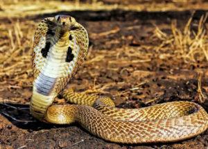 Giải mã giấc mơ thấy rắn đuổi đánh số mấy?