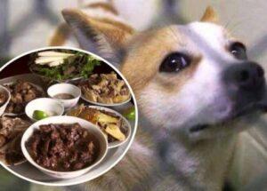 Mơ thấy ăn thịt chó là điềm gì? – Nằm mơ ăn thịt chó đánh số gì?