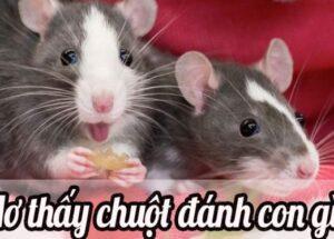 Mộng thấy chuột đánh con gì – Đây là điềm báo gì?