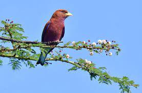 giấc mơ thấy chim
