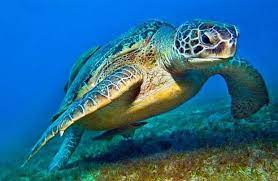 Mơ thấy rùa
