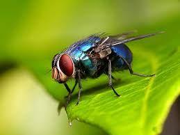 Nằm mơ thấy ruồi đánh con gì? Là điềm lành hay dữ?