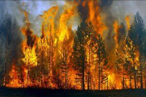 Mơ thấy cháy rừng